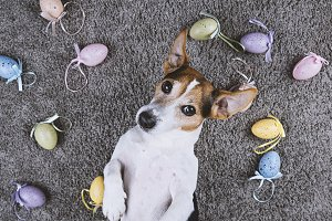 Cute dog with Easter eggs