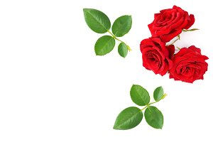 Red roses with green leaves