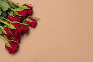 Red roses on beige background