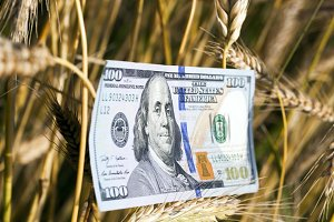 wheat and one hundred dollar