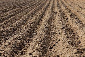 plowed land,  furrows