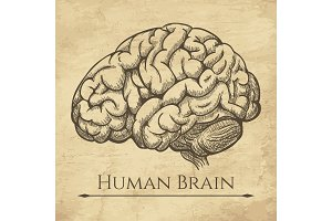 Brain retro anatomic etching