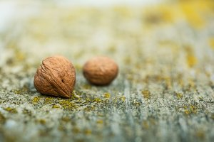 two small nuts on moldy bench