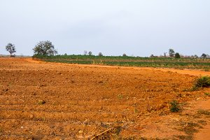 New sugarcane plantation in Thailand
