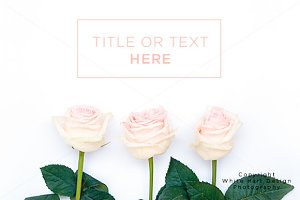 Styled stock photography - roses