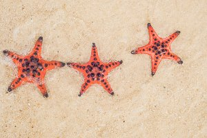 Red starfish on white sand on sunny tropical beach