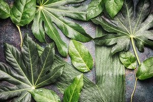 Flat lay of Tropical jungle leaves