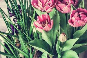 Springtime flowers pot