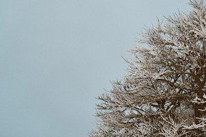 Frozen tree texture