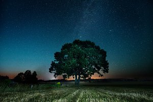 An old, big oak with Milkyway