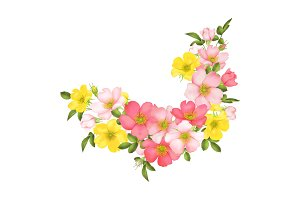 Dog-rose blooms. wild rose vector illustration