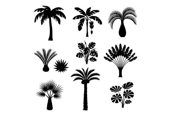 Tropical palm trees set. Exotic tro…