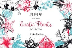 Exotic Plants Illustrations Set