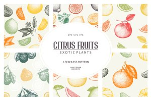 6 Seamless Citrus Fruits Patterns