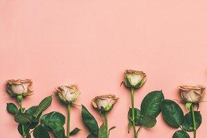 Flat-lay of roses