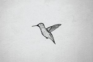 Hummingbird HAND DRAWN