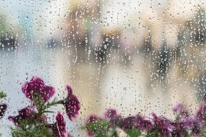 Purple flowers behind the wet window