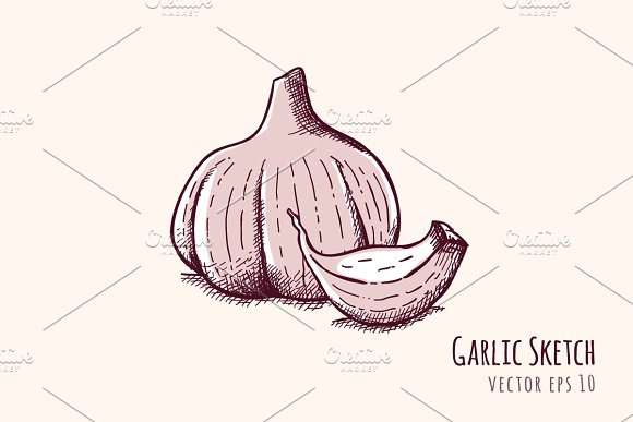 Garlic Sketch