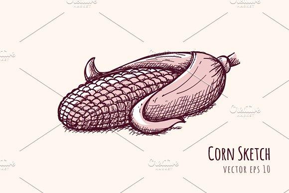 Corn Sketch