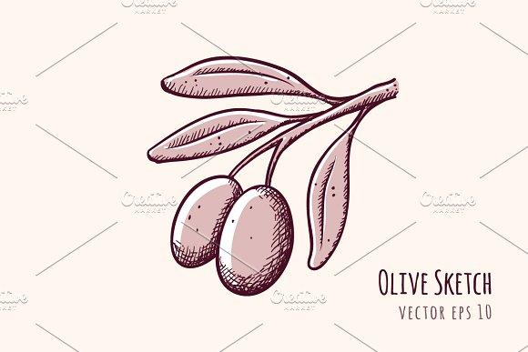 Olive Branch Sketch