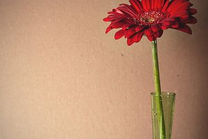 gerbera in a green glass vase