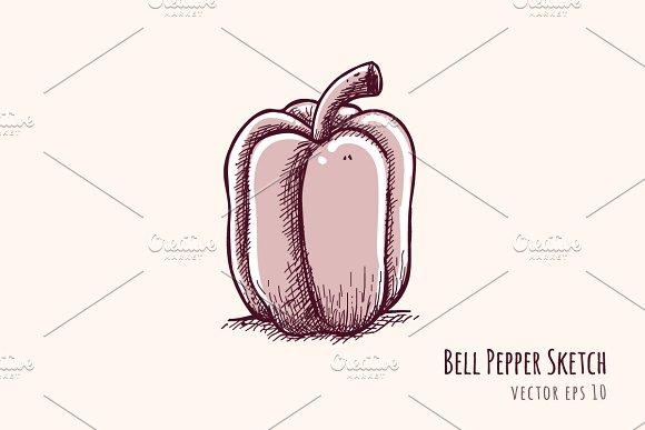 Bell Pepper Sketch