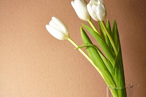 white tulips in glass vase on beige