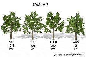 Oak 1