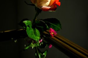 Rose and the reflection in mirror