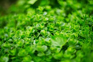 abstract blurred green grass