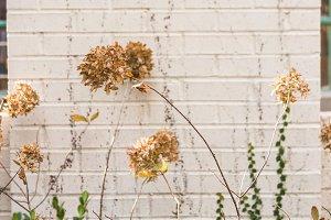 Wild Plants & Flowers Along a Wall