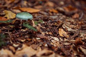 Green Forest Mushroom