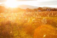 Golden summer evening on the meadow