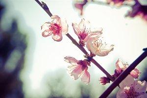 very spring