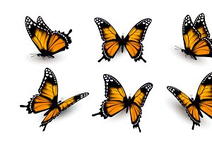 Six butterflies set