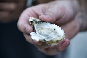 Open oyster in hand