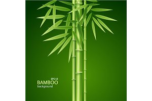 Bamboo Shoots Background Card