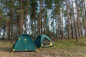 Tents in a coniferous forest.