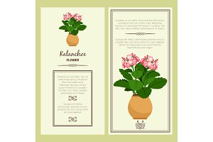 Kalanchoe flower in pot banners