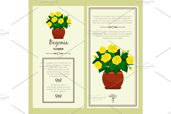 Greeting card with begonia plant