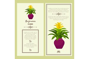 Guzmania flower in pot banners