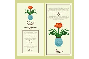 Clivia flower in pot banners