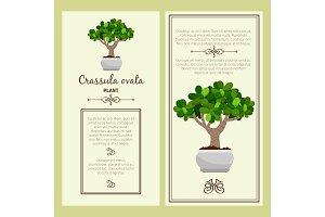 Greeting card with crassula ovata plant