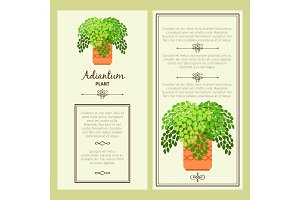 Greeting card with adiantum plant