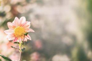 Flower at nature bokeh