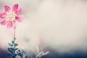 Pastel nature with pink flower