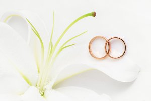 Wedding rings & Lily