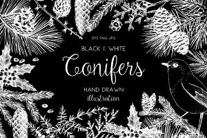 Black & White Conifers Collection