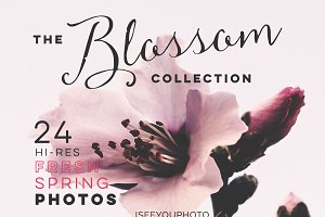 The BLOSSOM Collection iseeyouphoto