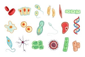 Anatomy of human cells set of detailed vector Illustrations